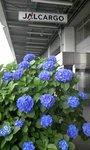 2009梅雨JAL.jpg