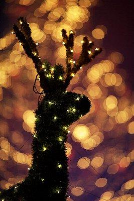 クリスマス_鹿_イルミ.jpg