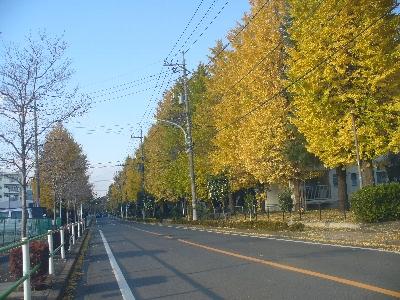 バイク便福生市紅葉2.jpg